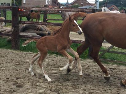 Foal from Qerly Chin Damline